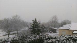 שלג באלוני הבשן שברמת הגולן. צילום: אמיר דובדבני, TPS